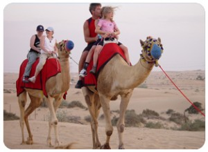 adventure dubai, camel ride dubai, Wadi bih Adventure, Falcon show dubai, Sand-boarding-Dubai, Hatta Pools, Belly dance show dubai